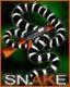 Avatar de Snake